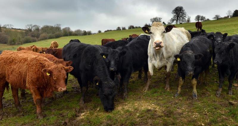 Gloucestershire beef farmer David Barton, TB Free England, bovine TB, blog_23952