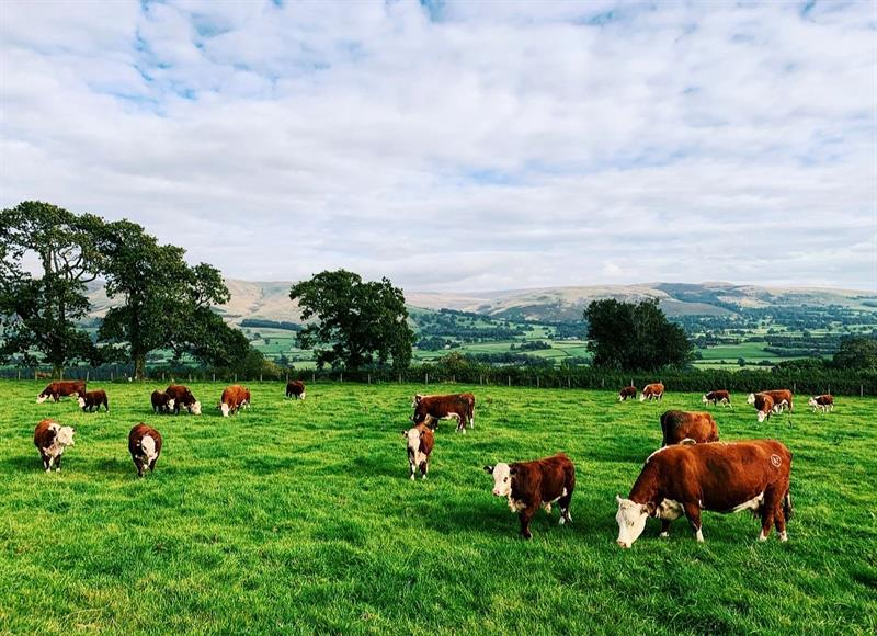 Climate friendly farming: The facts about British meat