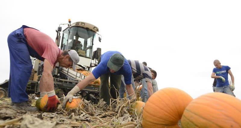 pumpkin town_24943