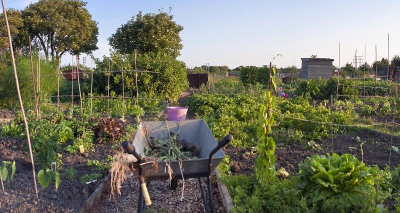 How to get started on your allotment