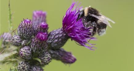 EU discusses pollinator decline at Bee Week